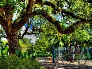 Bicicleta bajo un gran árbol