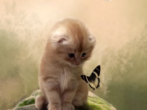 Gatito observando una mariposa