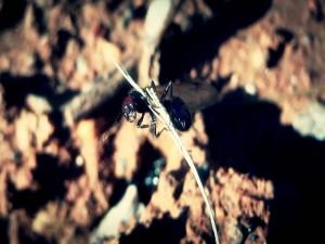 Hormiga voladora sobre una ramita
