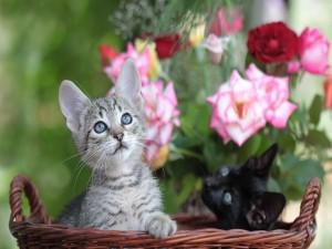 Dos gatitos en una cesta