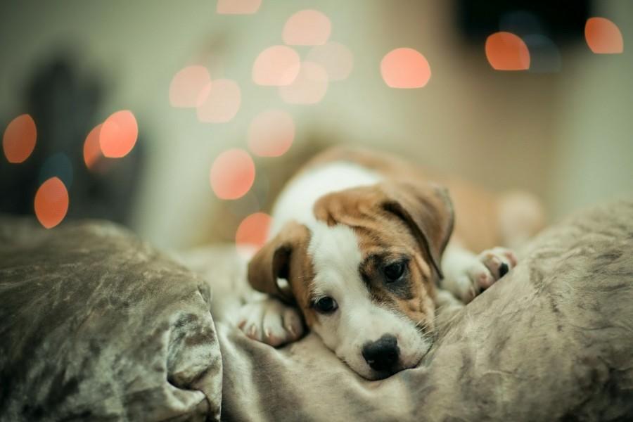 Un lindo perro