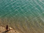 Contemplando el mar