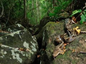 Serpiente pitón sobre una roca