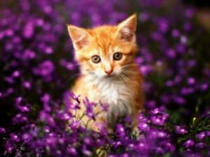 Gatito entre flores púrpura