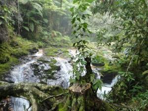 Río fluyendo en un bosque