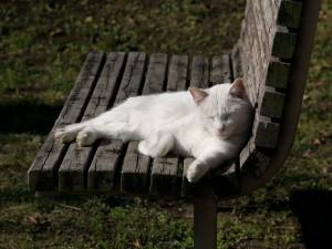 Gato dormido sobre un banco