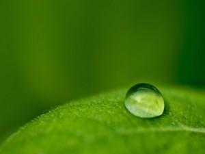 Gota de agua sobre una hoja verde