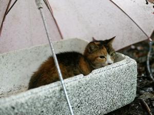 Gato bajo un paraguas