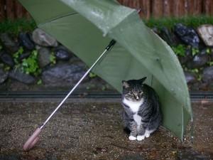 Gato resguardado de la lluvia