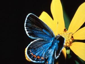 Linda mariposa en una flor amarilla