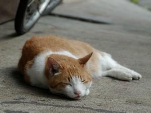Un gato dormido en el garaje