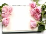 Rosas de color rosa sobre un cuaderno