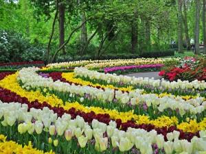 Coloridos tulipanes primaverales en un parque