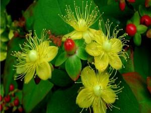 Originales flores con pétalos amarillos