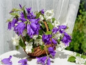 Cesta con campanillas lilas y jazmines