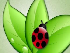 Mariquita sobre unas hojas verdes
