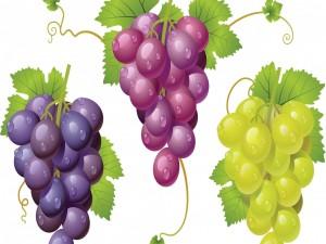 Uvas con gotitas de rocío