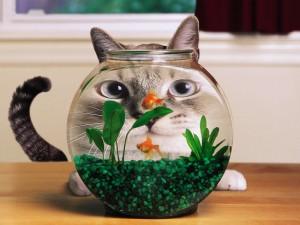 Gato observando a los peces