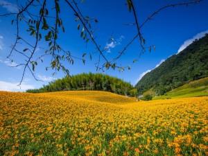 Un prado cubierto de flores amarillas