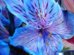 Bonita flor azulada