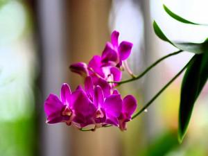 Ramas con orquídeas fucsias