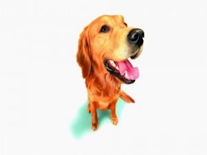 Un perro con la boca abierta
