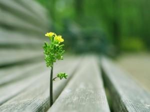 Rama con flores brotando entre unas maderas