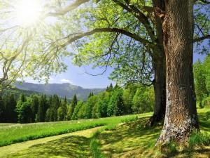 Sol brillando sobre los árboles