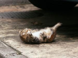 Gatito tumbado boca arriba