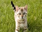 Un bonito gato sobre la hierba