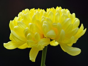 Hermosa flor amarilla