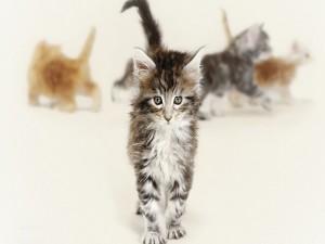 Un lindo gatito separado del grupo