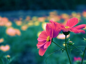 Bonitas flores en el jardín