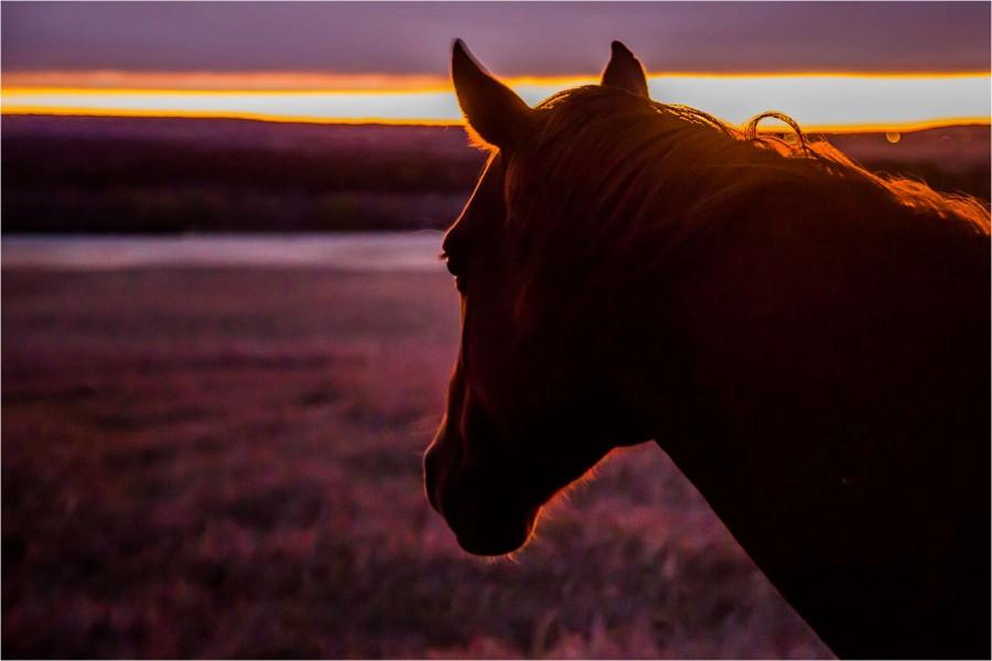 Caballo visto al amanecer