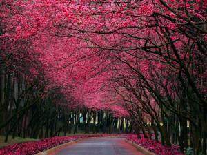 Árboles en flor junto a un camino