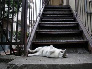 Gato tumbado bajo las escaleras