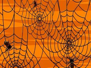 """Arañas construyendo su tela en la noche de """"Halloween"""""""