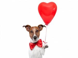 Perro sosteniendo un globo rojo con forma de corazón