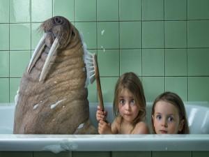 Niñas bañándose con una morsa