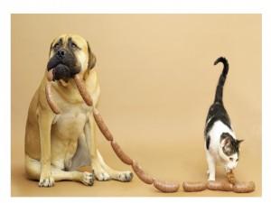 Perro y gato comiendo unos chorizos