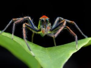 Araña posada en una hoja verde