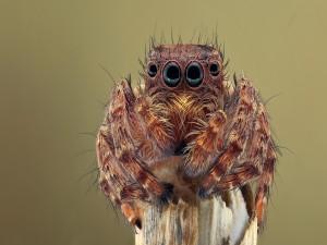 Araña sobre un tronco