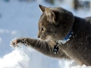 Gato jugando en la nieve