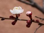 Flor en una rama