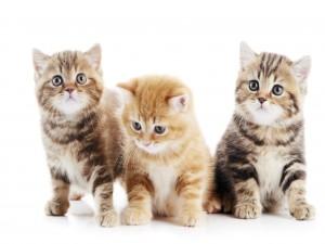 Tres lindos gatitos