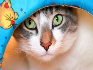 Gato con unos lindos ojos verdes