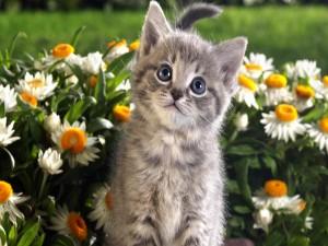 Gato sentado entre margaritas