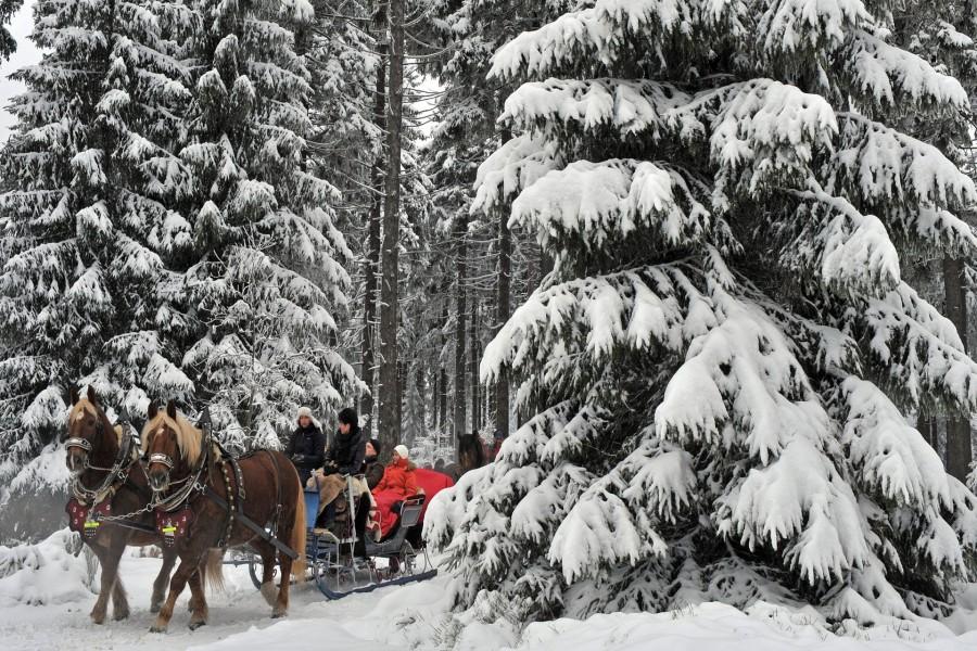Caballos tirando de un trineo en un paisaje nevado