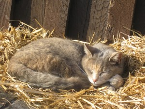 Gato durmiendo sobre la paja