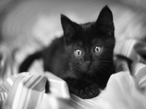 Un gatito negro sobre las sábanas